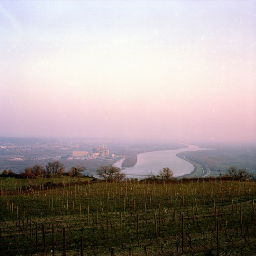 Vineyards are planted on either side of the Rhone river (credit)