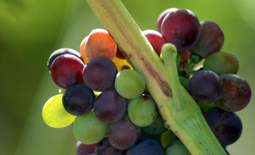 Cabernet Sauvignon Wine Quiz