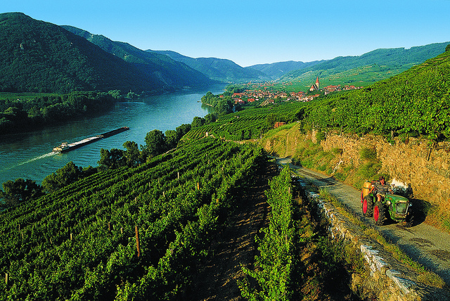 Terraced vines alongside the Danube river in Wachau. Photo credit