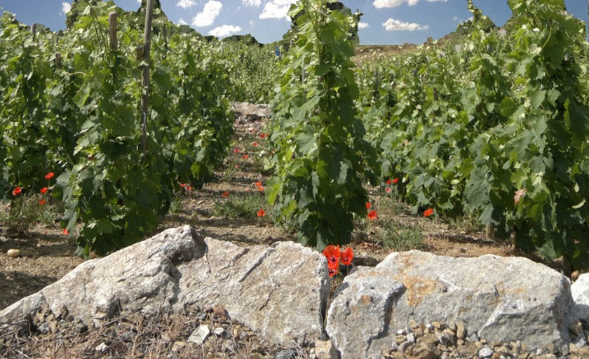 Domaine Besson's Electrifyingly Good Chablis