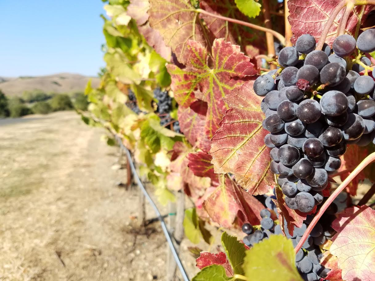 All about Pinot Noir - Sediments - The Last Bottle Wines Blog