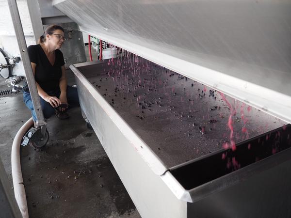 Winemaker Kari Auringer keeps a close eye on the press.