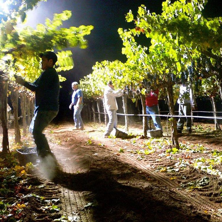 nightharvest