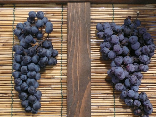 Grapes being dried for Amarone. ©Massimo Piazzi / Flickr user, licensed via Creative Commons