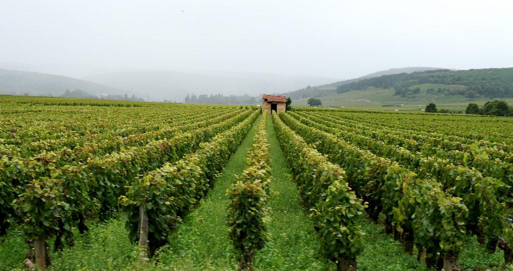 Burgundy Wine Quiz