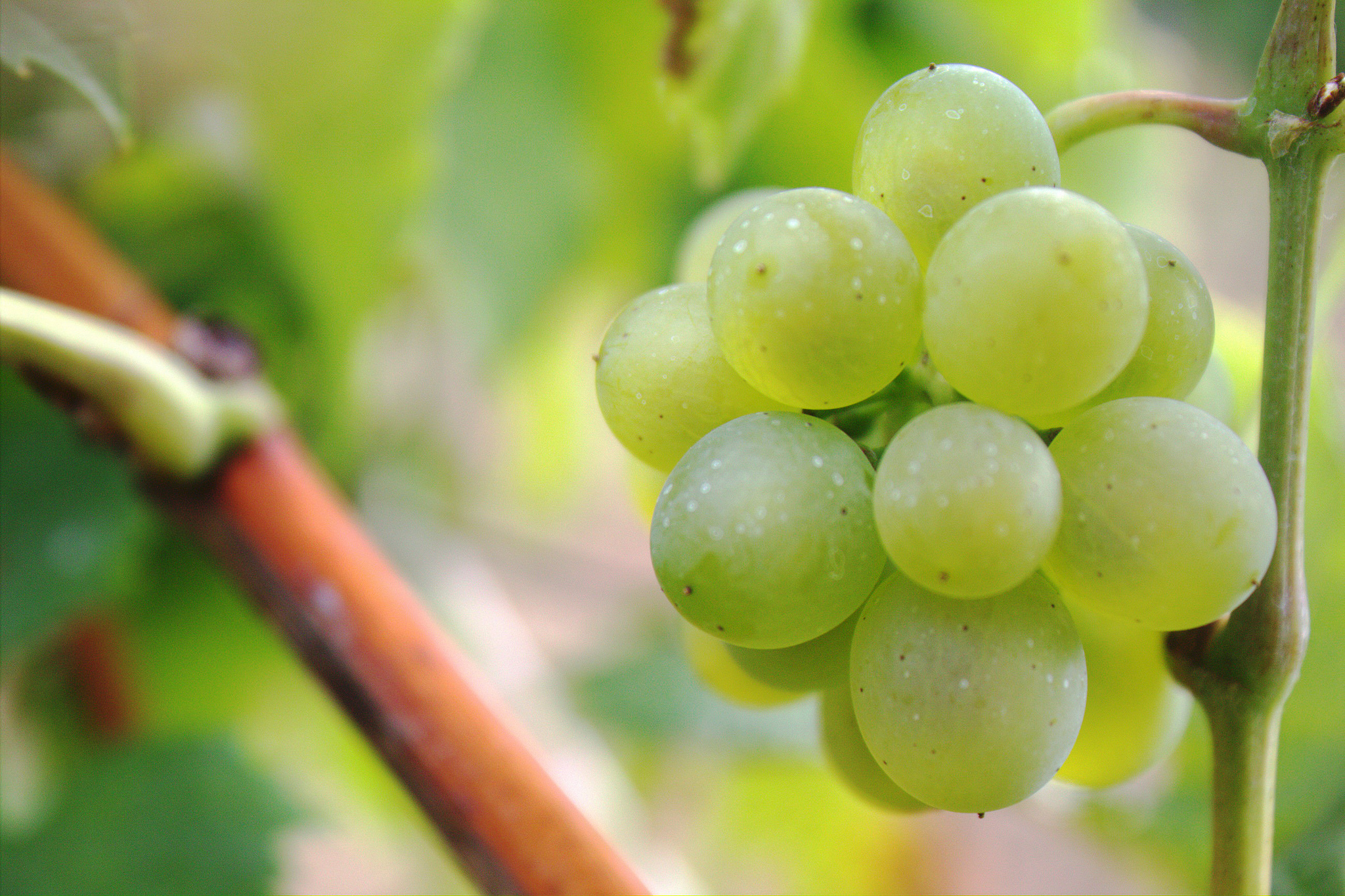 Why Climate Change Is Boosting French Wine Quality – For Now