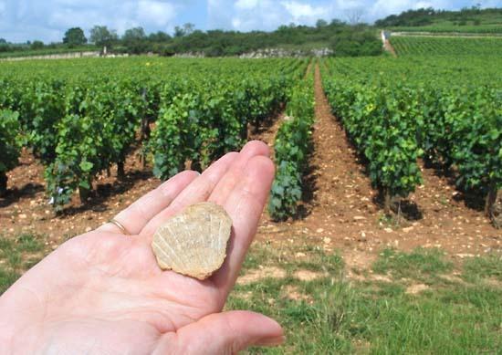 burgun_wine_route_fossile_montrache
