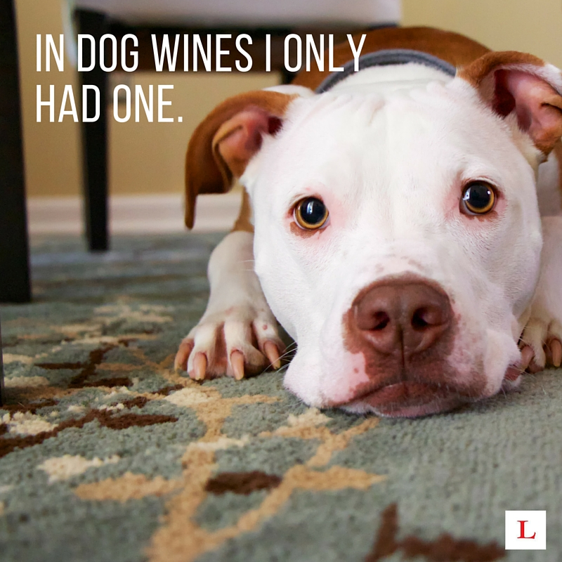10 Funny Quotes For Wine Lovers To Live By