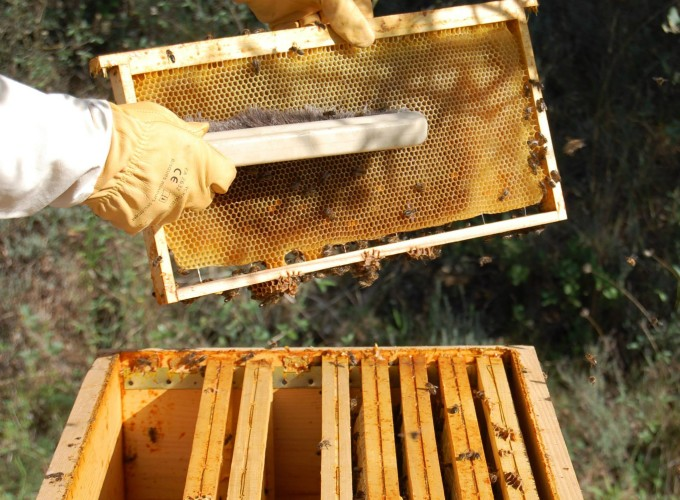 Bees play an important role in the vineyard, helping pollinate plants and feeding into a foundation of biodiversity.