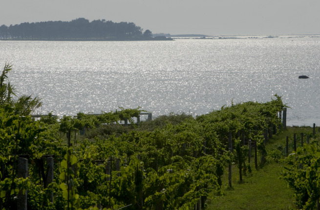 wine-lovers-guide-to-galicia-3