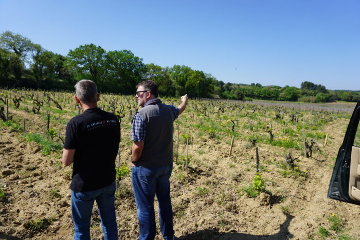 Daniel seems to know every inch of the 70+ year old vineyards.